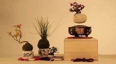 Bonsai Plants, Bonsai Garden, Bonsai Trees For Sale, Moss Plant, Japanese Gifts, Floating House, Modern Planters, House Plants, Unique Gifts