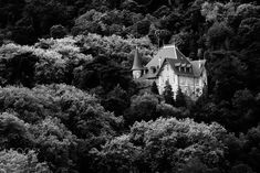 The house in the woods -