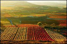 La Rioja in Autumn, Spain