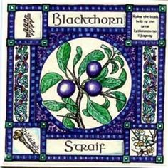 "✯ Blackthorn, Ogham name Straif, rules the Dark half of the year. In Divination it represents strife, obstinacy, stand up for your rights, assertiveness. The Blackthorn stick or ""Shillelagh"" is the traditional walking stick of the Celt, doubling at need as a cudgel, combining supportiveness with the role of a weapon! .:☆:. Shop: The Goddess & The Green Man ✯"