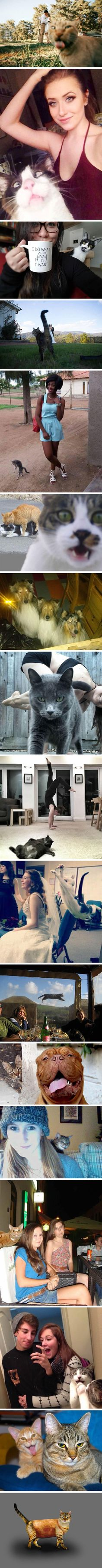 16 Times Asshole Cats Hilariously Photobombed Purrfect Shots - 9GAG