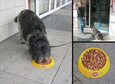 Creative Uses of Stickers in Advertising Guerilla Marketing Photo Guerilla Marketing Examples, Guerrilla Advertising, Good Advertisements, Creative Advertising, Marketing And Advertising, Viral Marketing, Pedigree Dog Food, Floor Graphics, Dog Food Bowls