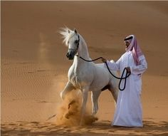 Arabian horse - Another great find while trying to find a holiday gift... Found via goldfishgirl