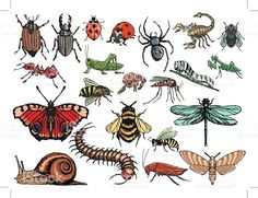 set of insects royalty-free stock vector art