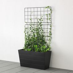 Ikea Fan Favorite Barso Trellis With Base Plate Create A