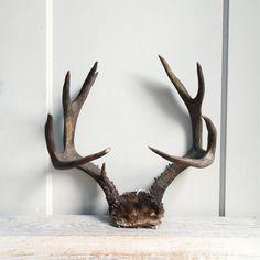 Vintage Deer Antler Rack / Horns Natural Decor от ethanollie, $89.00
