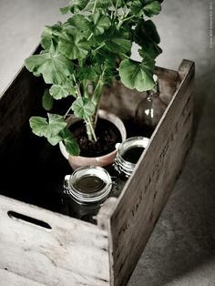Geranium and jars in a vintage crate: A faded palette