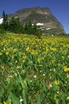 Logan Pass in springtime, Glacier National Park, Montana (pinned by haw-creek.com)