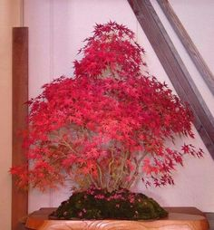 Acero rosso