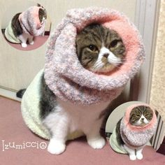 Here is my winter style! Wほっかむりん #arashi... Follow us on Instagram :D #cats #cat #catlover #lovecats #funny #fun #cute #socute #feline #felines #felinefriend #fur #furry #paw #paws #kitten #kitty #kittens #kittycat #kittylove #fluffy #fluff