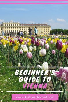 The beginner's guide to Vienna (Wien) in Austria - Tips, things to do, food...