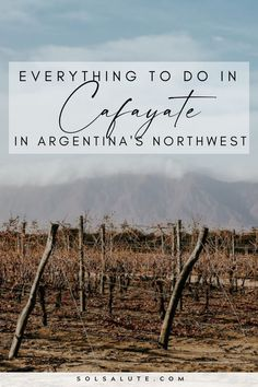 Things to do in Cafayate Argentina | What to do in Cafayate Argentina | Que hacer en Cafayate Salta | Mejores bodegas en Cafayate | Where to stay in Cafayate | Where to eat in Cafayate | Cafayate itinerary | Things to do in Salta Argentina | Where to go in Salta Northwest Argentina | Cafayate Travel Guide | Best wineries in Cafayate | Hikes in the quebrada de las conchas | Cafayate day tours | Argentina travel guide | Visit Cafayate | Visit Salta Argentina Scotland Hiking, Waterfall Trail, Hiking Europe, Argentina Travel, South America Travel, Best Hikes, Photo Location, Day Tours, Plan Your Trip