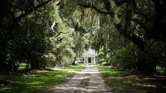 Mansfield Plantation (Georgetown, SC) - B&B Reviews - TripAdvisor