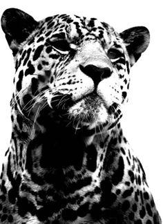 . #animals