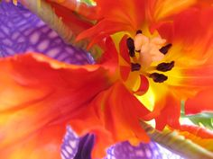Golden Fish - Macro Flower Photography via Etsy