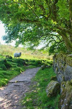 Dartmoor, England by The Magical Christmas Wreath Company Beau Site, British Countryside, Photos Paysage, Country Scenes, Dartmoor, Country Walk, Country Living, Country Life, Country Roads