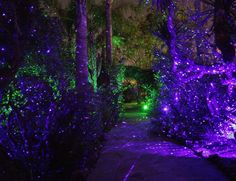 Blisslights lights give this effect. Beautiful!  0359072_10152562758932795_369498382991007345_o.jpg (1146×882)