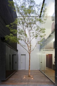 I love the simplicity of this inner courtyard. Just a single tree to bring zen to the space. The black backdrop is also an intriguing choice.