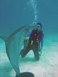 Loved diving with Dolphins in warm water!
