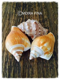 Sea Shells Instant Download Photo Summer Decor Beach by MOIRAPINA