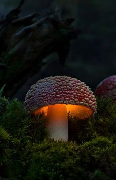 Forest At Night Nite Light Night Garden Garden Path Glowing Mushrooms