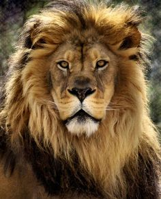 KING   Photo by ©Linda Mishler #WildlifeOwners