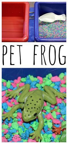 Frog Sensory Bin from www.fun-a-day.com - great for pet themes or pond themes, or just for fun!