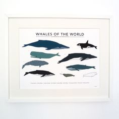 Whales of the World print £35.00