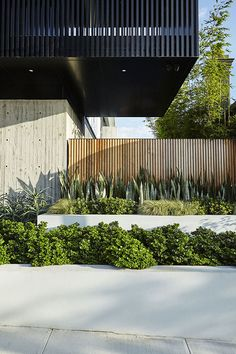 Love the mixture of concrete, timber and greenery. Good inspo for timber fence as the backdrop with concrete tiered garden beds.