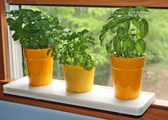 Plant One on US works with the window open or closed check it out. http://kck.st/1oaxJEb