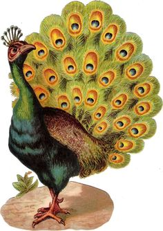 Oblaten Glanzbild scrap die cut chromo Pfau XL 24,5 cm peacock paon