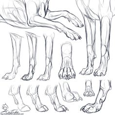 Study: Canine forepaws by CobraVenom on DeviantArt
