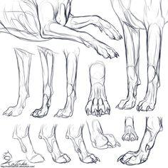 Study: Canine forepaws by CobraVenom on DeviantArt