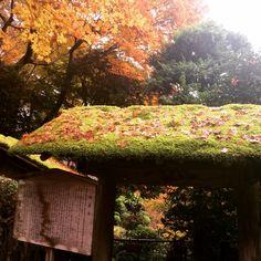 京都 大原 寂光院 紅葉 最高☆