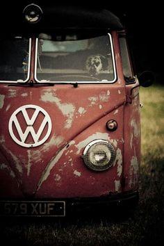 Cheeky dog #VW #Travel #GetOutdoors