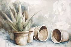 Gehwol Med Salve for cracked skin Cracked Skin, Diy Projects To Try, Aloe Vera, Watercolor Art, Cactus, Planter Pots, Succulents, Watercolors, Paintings