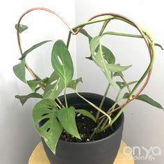 Plant Trellis, Wire Trellis, Plant Supports, Galvanized Steel, Silver Dollar, Houseplants, Indoor Plants, Heart Shapes, Vines