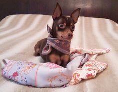 Dog with silk shawl