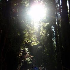 【a_skyandmusic】さんのInstagramをピンしています。 《* Muir Woods * 明けましておめでとうございます。 バタバタしながら年末を過ごし、ちょっとだけのんびり出来た大晦日&元日に、写真なぞ眺めてました~。 アメリカに行った時の、想い出の1枚。光の差し込む感じが、新年の始まりに良さそうだなぁと。 今年もマイペースに、写真をアップしていきます😃 ちなみに、写ってるのは私じゃありません(笑)  #森林 #森 #自然 #光 #レッドウッド #ミュアウッズ #カリフォルニア #nature #woods #forest #muirwoods #muirwoodsnationalpark #california》