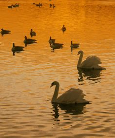On golden pond (by David Dai)