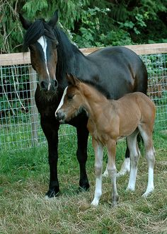 """Bonny and Conbrio, by Nikki Tate 