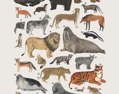 Creatures of the order Carnivora- vintage inspired science poster by Kelsey Oseid
