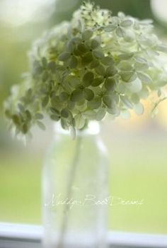 I love this native bloom, so natural, soft and pretty in an old jar......