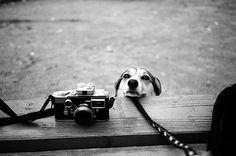 camera's & friends...