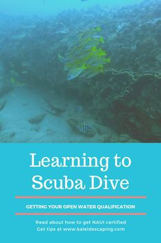 Learn to Scuba Dive Learn To Scuba Dive, Wetland Park, Scuba Gear, Snorkelling, Colorful Fish, Open Water, What To Pack, Cool Eyes, Scuba Diving