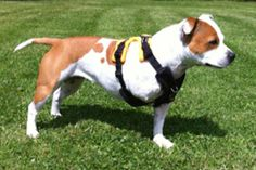 Perfect Fit Harness Passes the Tripawds Test