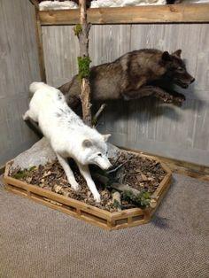 2 Wolf Mounts