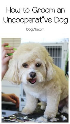 If you want to know how to groom an uncooperative dog, you've come to the right place. The basic gist of how to groom an uncooperative dog involves desensitization and lots of treats. It takes patience and time, but it's doable and will make both your lives so much better. #dogs #DogGrooming #pets