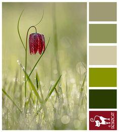 Solo - Green, Fern, Kaki, Leaf, Burgundy, Red - Designcat Colour Inspiration Board