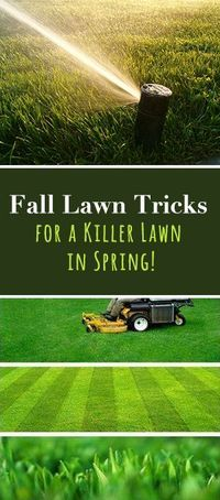 Fall Lawn Tricks for a Killer Lawn in Spring! The secret to a great lawn lies in fall lawn maintenance. Check out these tips and ideas!